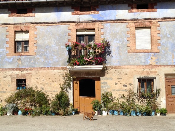 I loved this scene; a beautiful house-front that I passed while walking through a very small town.  There is a tiny dog in front, too!